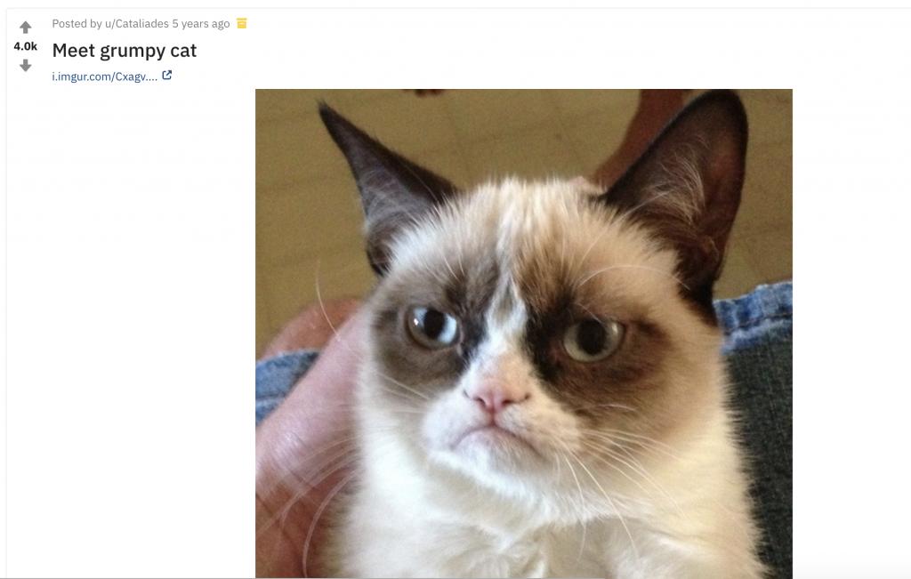 grumpy cat reddit